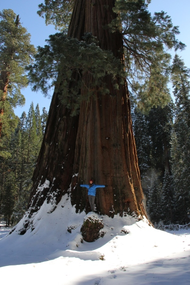All 1.85m of me and a Sequoia tree